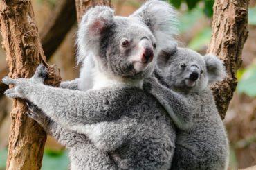 animals, branch, cute